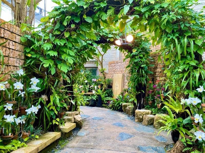 熱帯ドリームセンターカトレア温室06