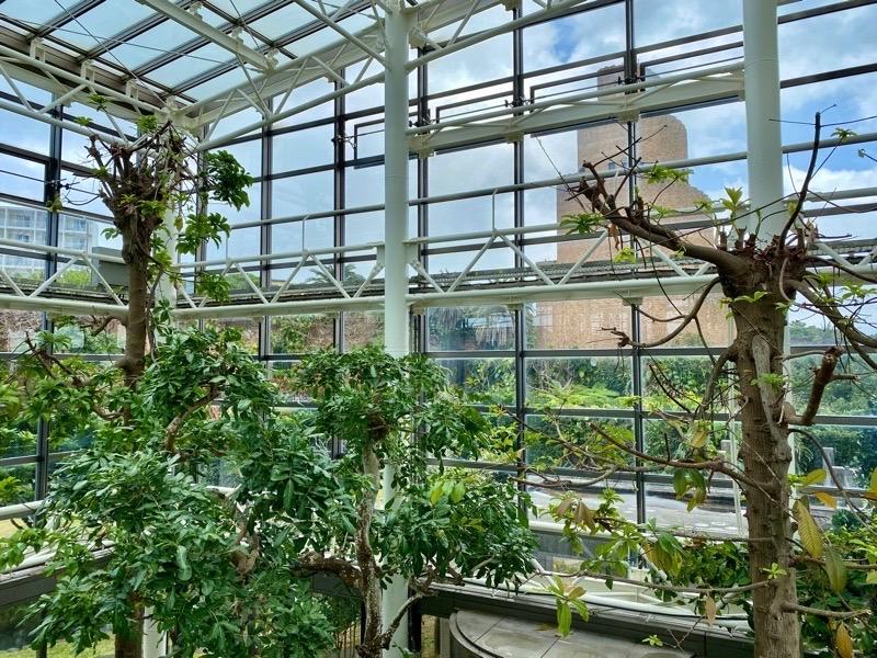 熱帯ドリームセンター果樹温室03