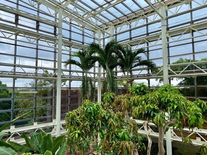熱帯ドリームセンター果樹温室04