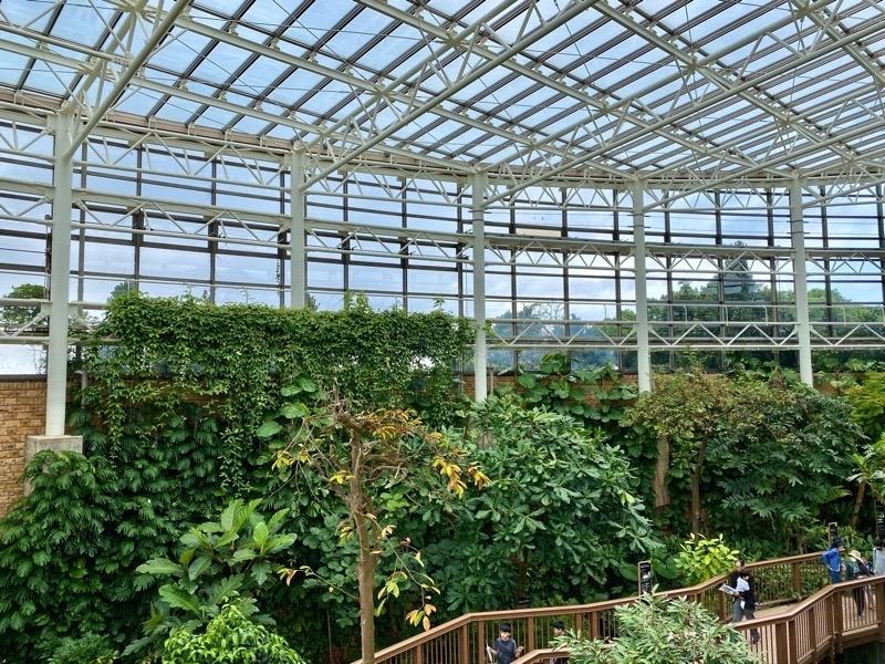 熱帯ドリームセンター果樹温室05