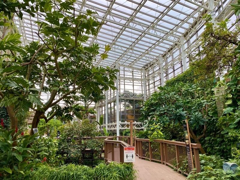 熱帯ドリームセンター果樹温室06